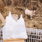牛窓ジェラート工房 コピオ -