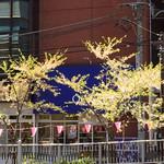 OGGI - 葉桜の向こうに目黒本店
