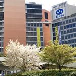 105525491 - 新宿駅西口の桜