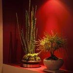 九月堂 - ミニ盆栽やこけ玉がお出迎え