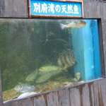 蔵毘 - 別府湾の天然魚