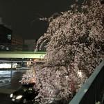 105911473 - 丸の内交差点 歩道橋脇の桜