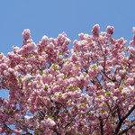 ラーメン二郎 - 青空に映える