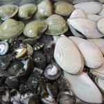 グストーソ 銀座 - 白ワイン蒸し用の蛤、白貝、ナガラミ貝