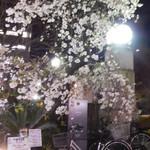 魚と酒はなたれ - 近くの枝垂桜