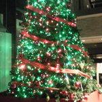 10620265 - 建物の前にあったクリスマスツリー