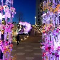 舞桜-ミッドタウン日比谷の広場