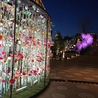 舞桜-照明も変る、イベント