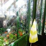 アリスの茶屋 -