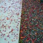 割烹 天ぷら 三太郎 - お墓参りした栽松院の落葉紅葉★