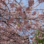 Sanjiro - ふろく   歴史の里      八重桜が満開でした