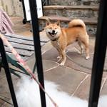 カフェ ラ・ボエム - 芝犬も笑うのネッ!