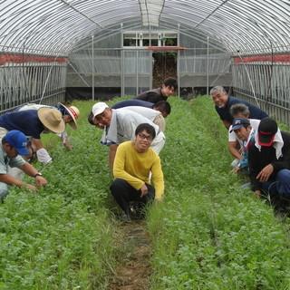*【江口農園】タイ屋台999提携農家!!毎日新鮮な野菜!!