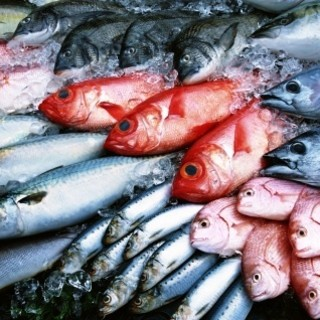 産地直送の鮮魚メニュー