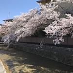 京うどん 生蕎麦 岡北 - 道中の綺麗な桜