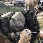107235654 - 伊豆シャボテン動物公園と言えばカピバラの露天風呂