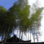 10732462 - 素晴らしい竹