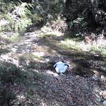 10753332 - お店の裏の川の流れ