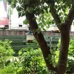 107616043 - お庭の木には餌箱                       すずめが餌を啄ばみに来ます