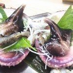 Matsukichi - 美しい とり貝