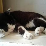 quatre cafe - Quadrilleの看板猫