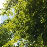 カフェ フクバコ - 石山寺 新緑見上げます