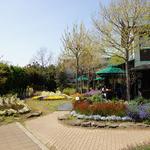 道の駅とみうら 枇杷倶楽部 - 2011年春