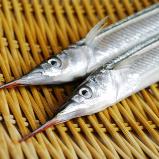 魚について