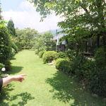 プリムローズ - 綺麗なお庭