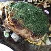 日の出 - 料理写真:肉玉そば台付脂