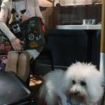 CAFE GITANE - ピョンのカフェ・デビュー