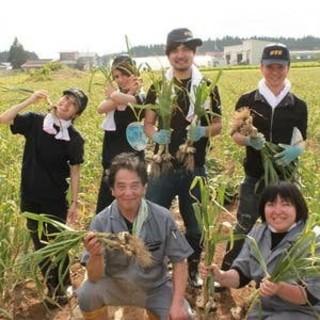 毎年スタッフ自らが収穫する、青森県産の最高級にんにくを使用!