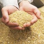 egg - その他写真:お米、発酵飼料、カキガラを混ぜた特製のえさ