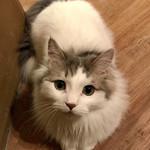 Cat Cafe てまりのおうち - 可愛いほうき