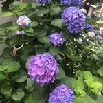 味享 - アジサイの季節@西新橋の片隅
