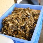 かき小屋 - とれたての牡蠣