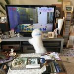 カフェ ラ・ボエム - TVに犬が出てくると大変〜♬