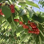 ヤマヨン農園 - 料理写真: