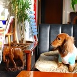 ペーパー ムーン - 小型犬でおとなしければ店内OKです