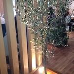 10996612 - このオリーブの木がお店のイメージだそうです。