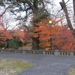 綱町三井倶楽部 - 2011/12まだ紅葉してました