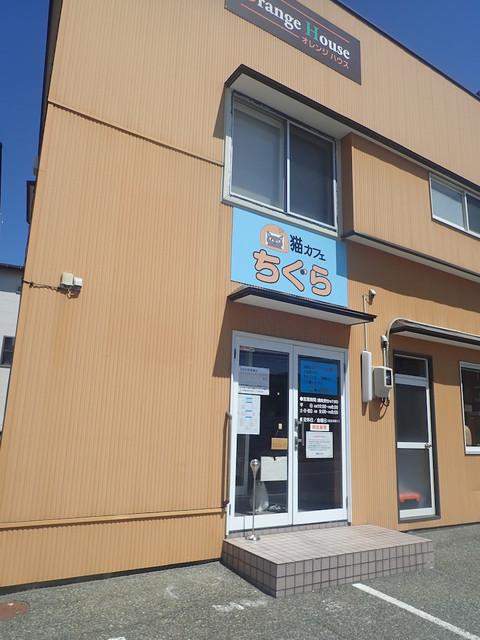 猫カフェちぐら - 新潟西区、小針駅や青山駅から少し歩いたとこミャ ルイ「だれか来たニャ」