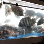 魚洋丸 - 旬魚が悠々と泳いでいます ٩(ˊᗜˋ*)و大将が一本釣りした魚がいる事も!