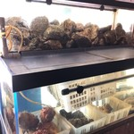 魚洋丸 - 貝専用水槽☆ オーダーが入ってから取り出しますので海の味がしっかり!