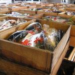 さくさく - 料理写真:宮崎県青島港より航空便にて直送の鮮魚達♪