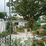グールトン - お庭の大きな木