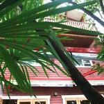 阿里山cafe - 上を見上げると・・・