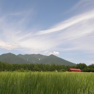テラス席からは丘の風景、室内席からは山の風景が一望できます。