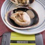 麺屋 岬亭 - 伊良湖名物「焼き大あさり」を携帯の大きさと比較してみました。