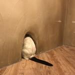 Cat Cafe てまりのおうち - 問題:誰の尻尾でしょうか?